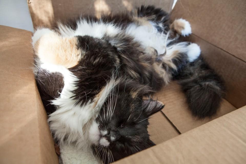Cat Cat Box_2