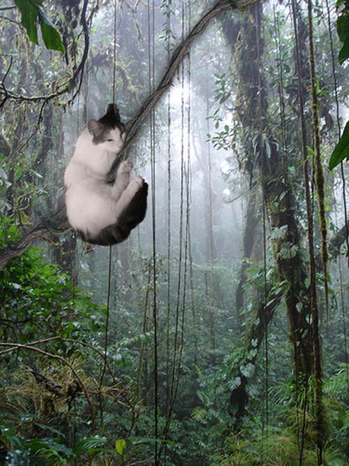 Sleepy-Tarzan-Cat